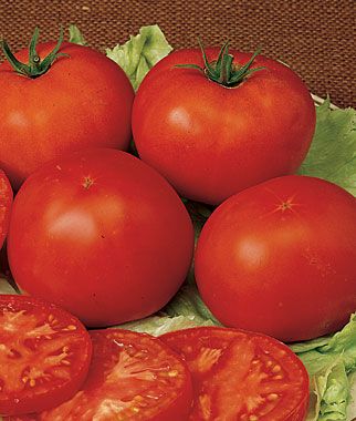 Tomato, Burpees Early Pick VF Hybrid, , large